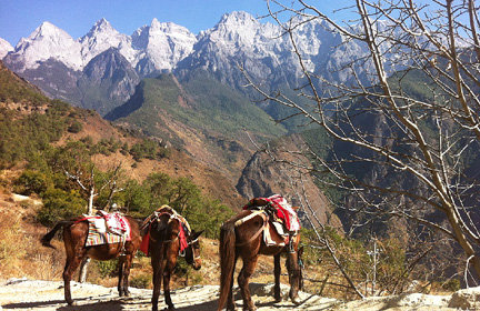 Local farmer on Tiger Leaping Gorge use horses for carrying things