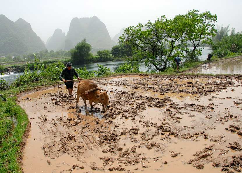 Chinese Farmer was plowing in Yangshuo counntryside