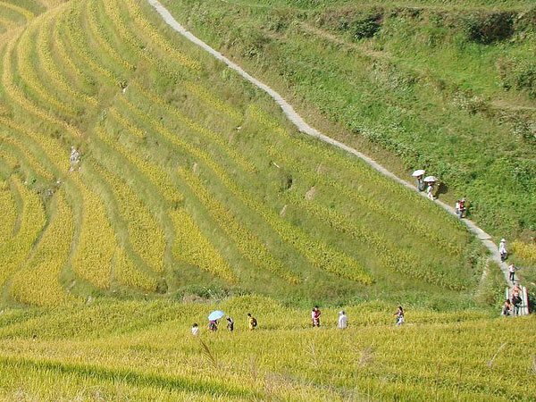 Longji hiking for a great view of the marvelous rice terraces