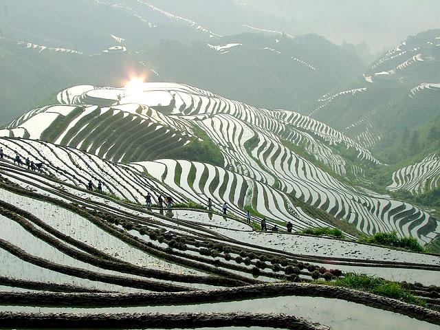 Longji (dragon's backbone) rice terraces,Longsheng