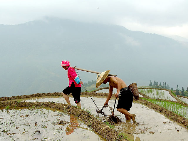Spring plowing on Longji Rice Terraces