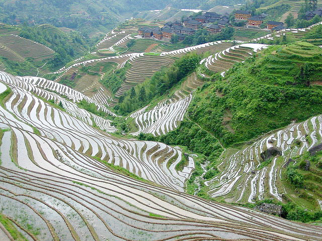 The contour-map-like Longji terraced fields in Longseng,Guilin