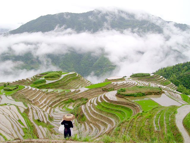Admire the breathtaking Longji terraced fields in the mist