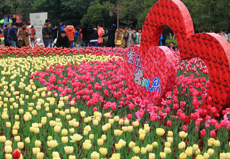 Tulips within Zizhou Park,Guilin